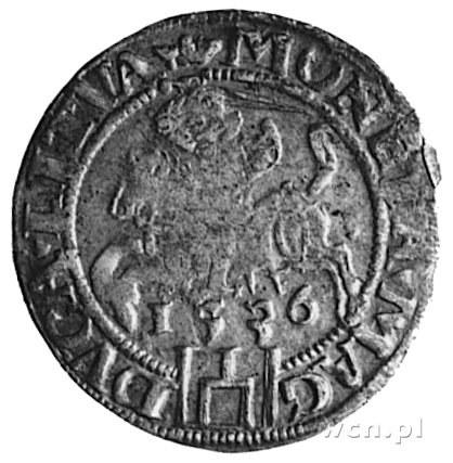 grosz 1536, Wilno, j.w., Gum.517, Kurp.211 R3, odmiana ...