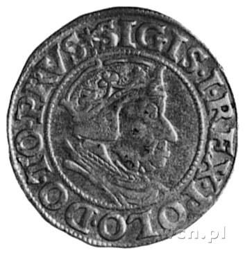 grosz 1538, Gdańsk, Aw: Popiersie i napis, Rw: Herb Gda...