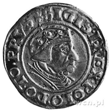 grosz 1539, Gdańsk, j.w., Gum.565, Kurp.482 R