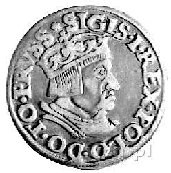 trojak 1536, Gdańsk, Kurp. 498 R1, Gum. 569, stara paty...