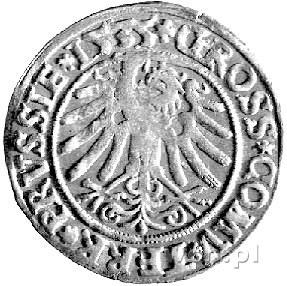 grosz 1535, Toruń, Kurp. 342 R, Gum. 531