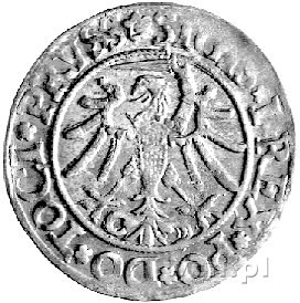 grosz 1535, Elbląg, Kurp. 600 R, Gum. 582, patyna, ładn...
