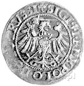 grosz 1539, Elbląg, Kurp. 608 R, Gum. 583, minimalnie n...