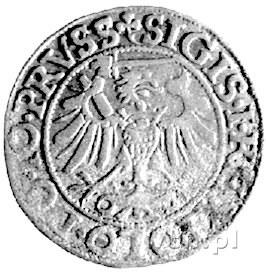 grosz 1540, Elbląg, Kurp. 610 R, Gum. 583