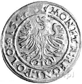 grosz 1546, Kraków, drugi egzemplarz, odmiana z rozetą ...