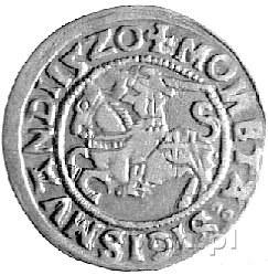 półgrosz 1520, Wilno, rzadka odmiana z omyłkowym napise...