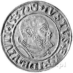grosz 1537, Królewiec, Neumann 45, Bahr. 1164