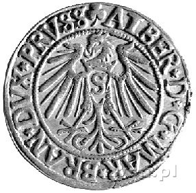 grosz 1542, Królewiec, Neumann 46, Bahr. 1182