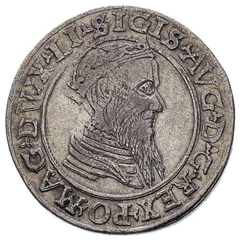 czworak 1568, Wilno, interpunkcja w postaci trójlistków...