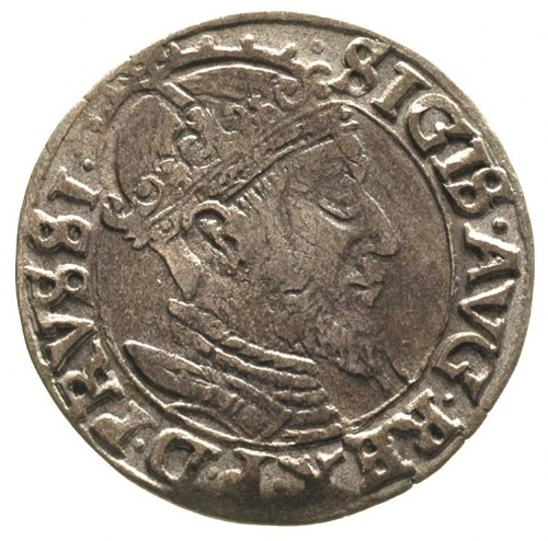 grosz 1556, Gdańsk, odmiana z dużą głową króla, T. 4, m...