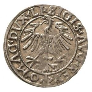 półgrosz 1556, Wilno, napisy LI / LITVA, Ivanauskas 489...