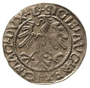półgrosz 1559, Wilno, Ivanauskas 504:77