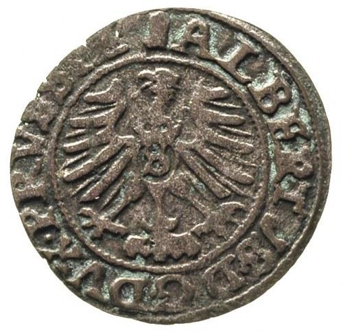 szeląg 1559, Królewiec, Bahr. 1225, Neumann 48, ciemna ...