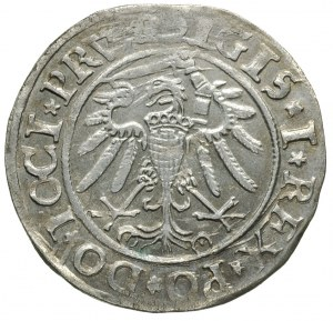 grosz 1534, Elbląg, na awersie końcówka napisu PRV