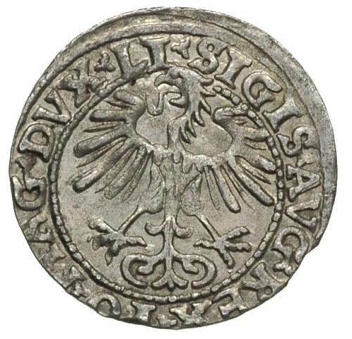 półgrosz 1554, Wilno, Ivanauskas 4SA51-16, T. 12, rzadk...