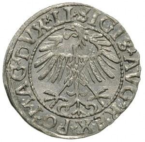 półgrosz 1557, Wilno, Ivanauskas 4SA68-16, wyśmienity s...