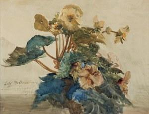 Wyczółkowski Leon, BEGONIE, 1914