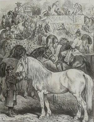 Juliusz Kossak (1824-1899), Konie