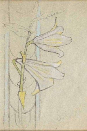 Stanisław Wyspiański (1869 Kraków - 1907 Kraków), Studium lilii, ok. 1895-1900
