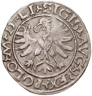 Zygmunt II August 1545-1572, Półgrosz 1566, Tykocin. RR.
