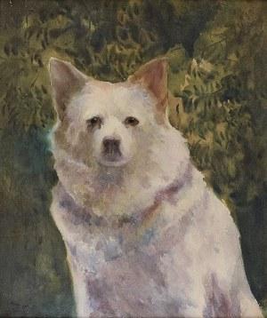 Julian FAŁAT (1853-1929), Biały szpic, ok. 1912