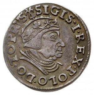 trojak 1539, Gdańsk, na rewersie trójlistki, Iger G.39....