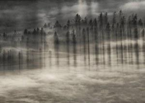 Zygmunt Trylański, Shadows, 2011