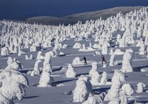 Zygmunt Trylański, Through the snowy forest, 2019