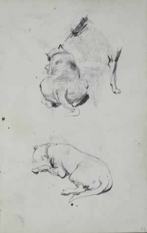 Stanisław Kaczor Batowski (1866-1945), Studia leżącego psa