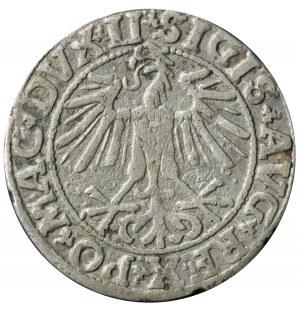 półgrosz 1550