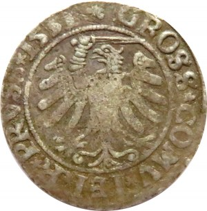 Zygmunt I Stary, grosz 1531, Toruń, końcówka napisów PRU/PRUSS