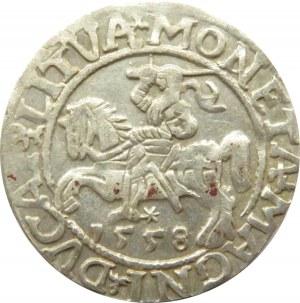 Zygmunt II August, półgrosz 1558, Wilno
