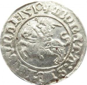 Zygmunt I Stary, półgrosz 1510, Wilno, ogon konia w kształcie