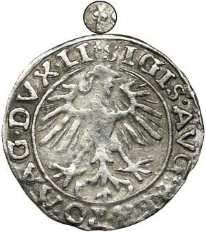 Sigismund II August, Halfgroat Vilnius 1557 - two trefoils - UNLISTED, VERY RARE