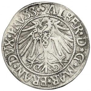 Prusy Książęce, Albrecht Hohenzollern, Grosz Królewiec 1542