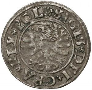 Zygmunt I Stary, Szeląg Gdańsk 1531