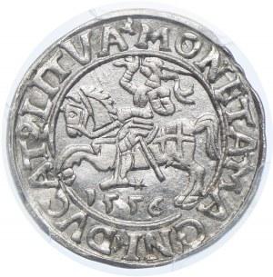 Polska, Zygmunt II August, półgrosz 1556 Wilno, PCGS AU58