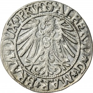 Prusy Książęce, Albrecht Hohenzollern (1525–1568), grosz pruski lenny, Królewiec; 1544