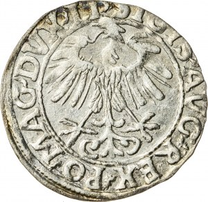Zygmunt II August [1544 (1548) –1572], półgrosz litewski, Wilno; 1557