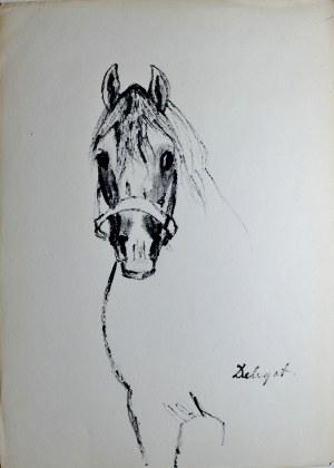 """Ludwik Antoni Maciąg (1920-2007), Koń """"Delegat"""" w ujęciu z przodu"""