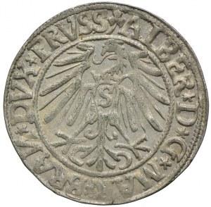 Prusy Książęce, Albert Hohenzollern, grosz 1544