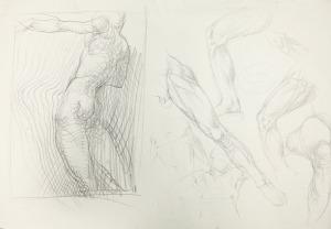 Franciszek Starowieyski, Studium anatomiczne
