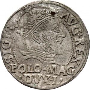 Zygmunt II August, grosz 1547 na stopę polską, Wilno
