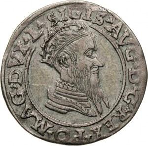 Zygmunt II August, czworak 1569, Wilno