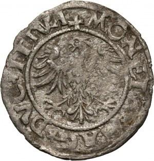 Zygmunt II August, półgrosz 1545, Wilno