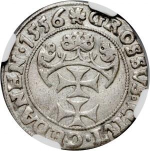 Zygmunt II August, grosz 1556, Gdańsk