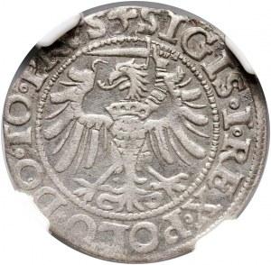 Zygmunt I Stary, grosz 1538, Elbląg