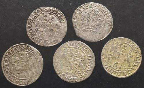 Zygmunt II August, zestaw półgroszy (5 sztuk)