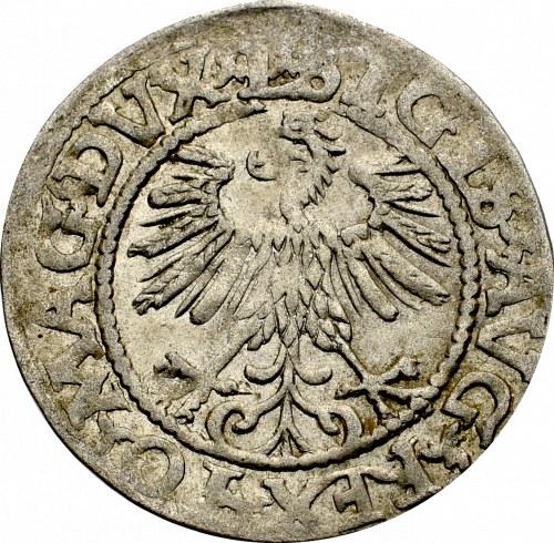 Zygmunt II August, Półgrosz 1560, Wilno - L/LITV