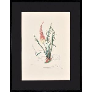 Salvador Dali (1904-1989), Z cyklu Florals: Kniphofia aphrodisiaca [Stado nosorożców], 1972